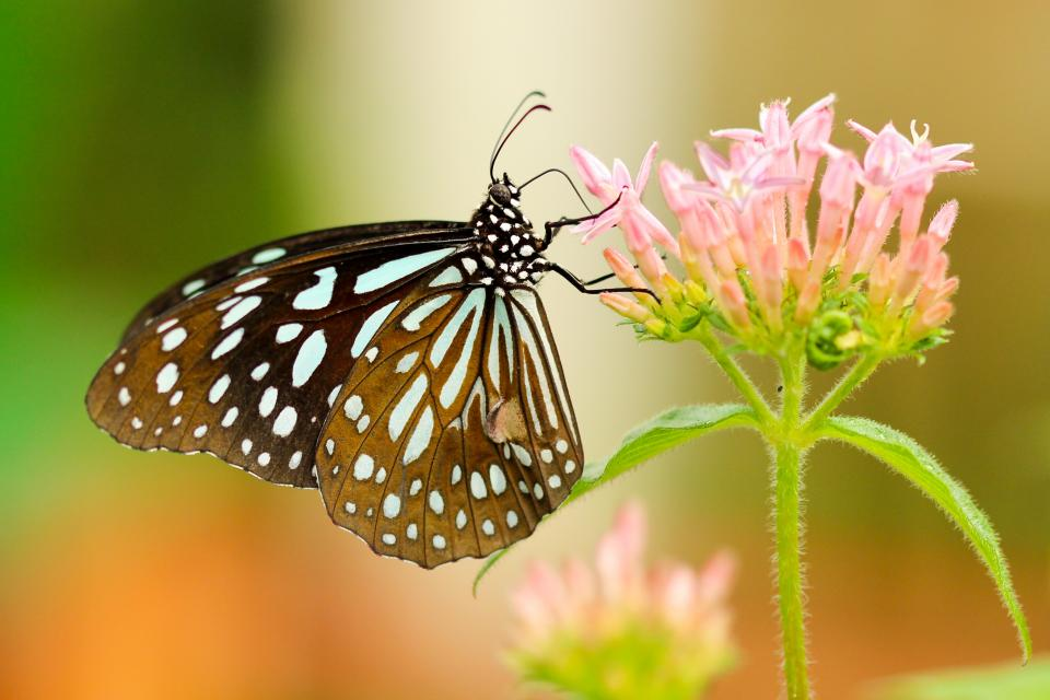 butterfly, nature, insect, flower, green, leaves, petal, plant