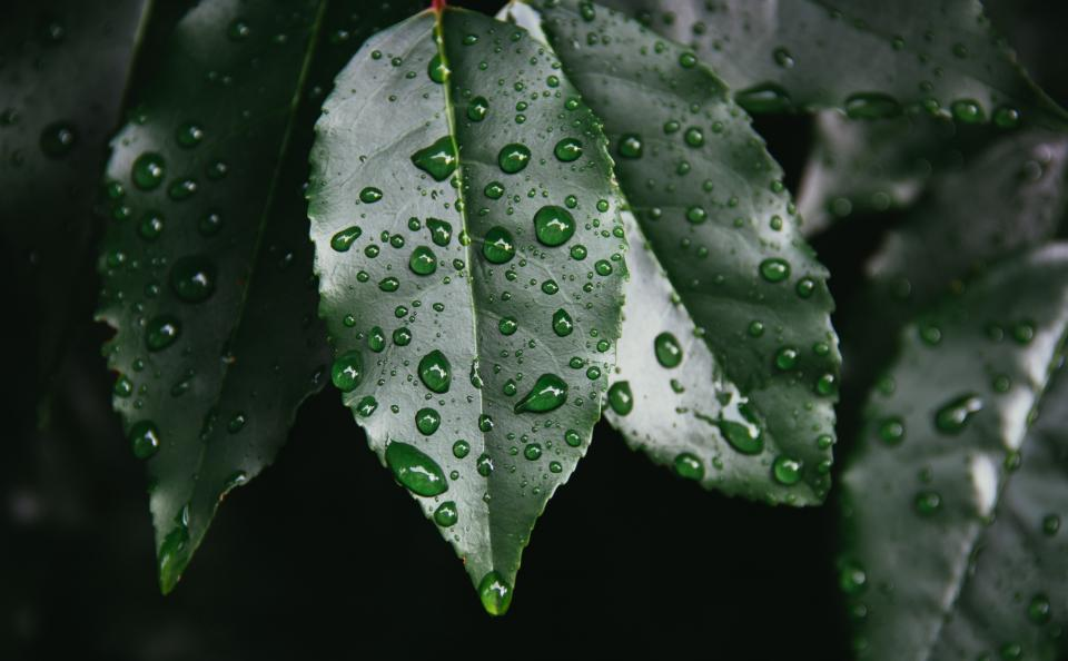 plants, leaves, leaf, rain drops, raining, wet, nature