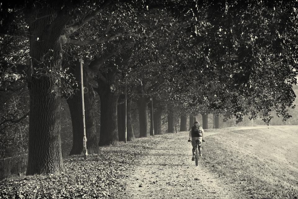 bike, bicycle, cyclist, biker, exercise, fitness, trial, path, grass, trees, black and white