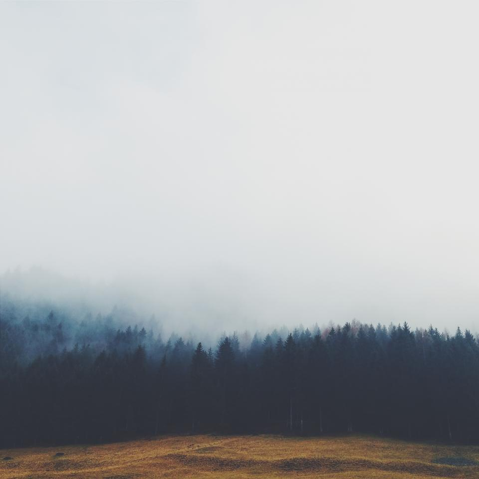 trees, forest, fog, grey, sky, field, grass, nature
