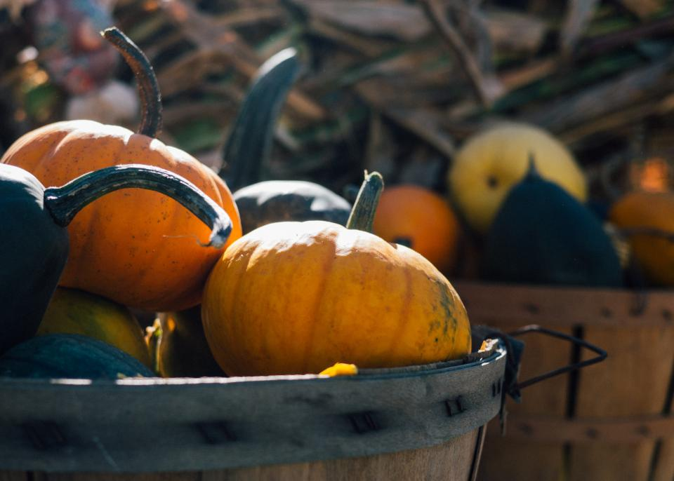 pumpkins, basket, halloween, fall, autumn, nature, outdoors