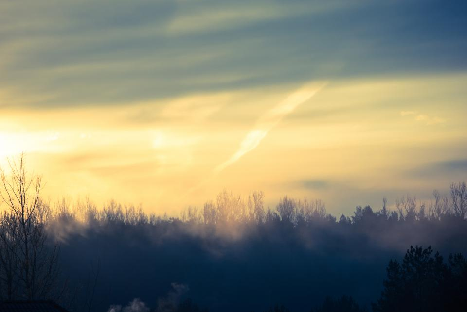 sunrise, morning, sky, trees, nature, landscape, fog