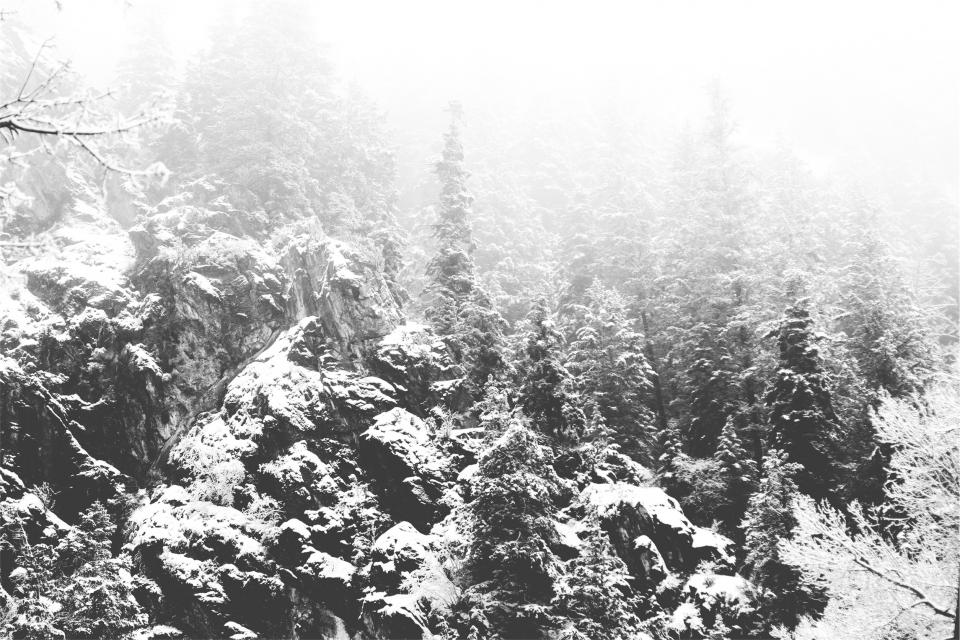 forest, trees, snow, nature, black and white