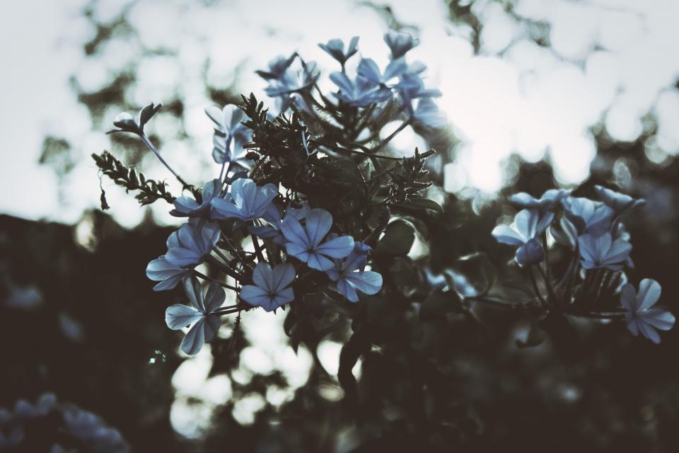 flowers, plants, garden, nature, blossoms