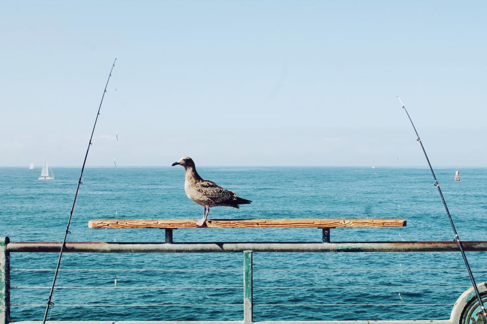bird, perch, fishing rods, ocean, sea, sailboats, horizon, blue, sky, water, sunny