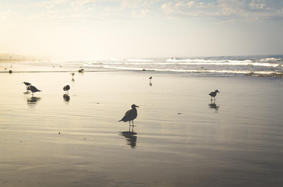 beach, sand, shore, ocean, sea, waves, water, pigeons, birds, sunshine, summer, sky
