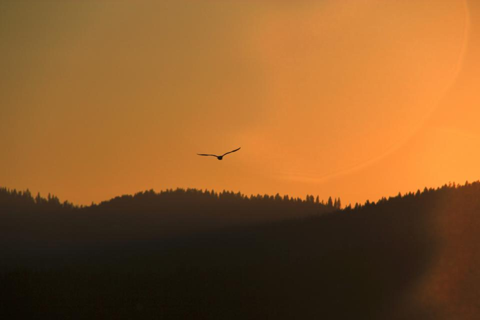sunset, dusk, bird, animals, flying, sky, trees, forest, mountains, hills, landscape, nature