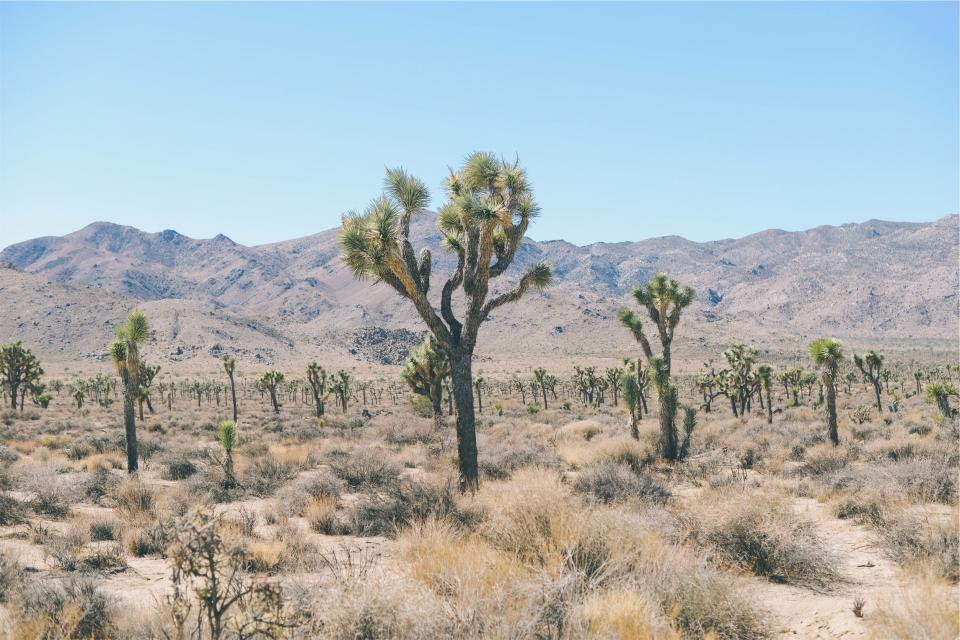 desert, trees, shrubs, field, mountains, landscape, nature, blue, sky