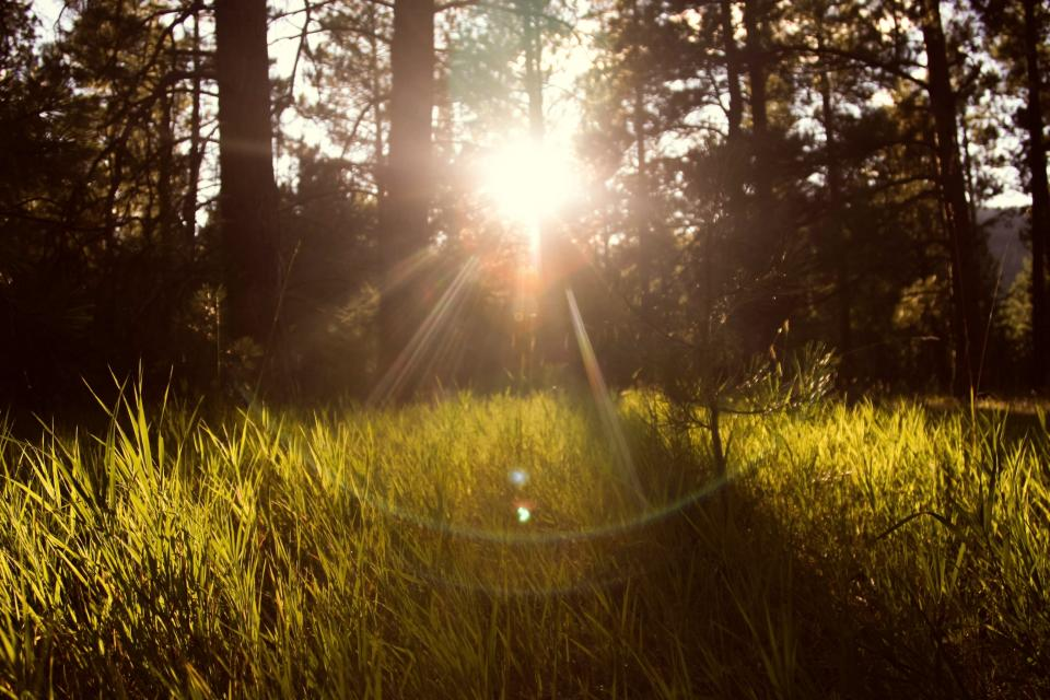 sun rays, grass, nature, outdoors, forest, woods, green, trees