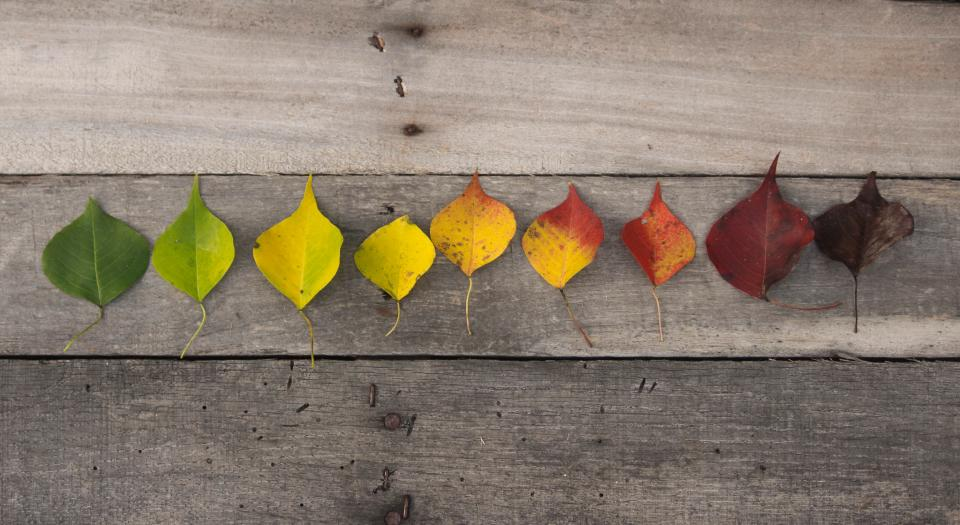 autumn, fall, colorful, leaves, nature, background, wood