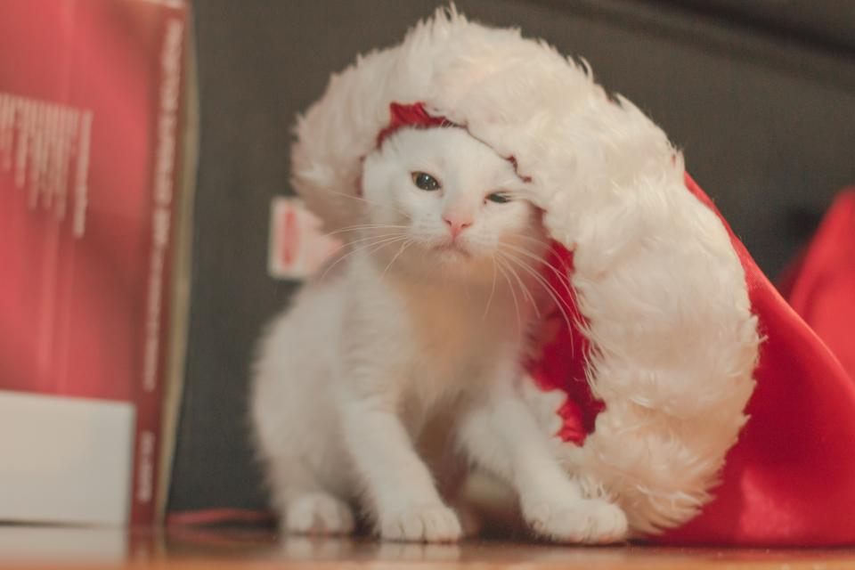 white, cat, whiskers, christmas, pet, animals