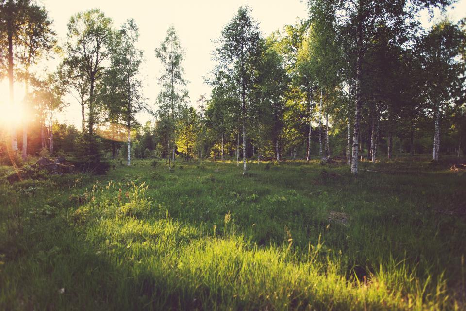 sun rays, grass, trees, nature