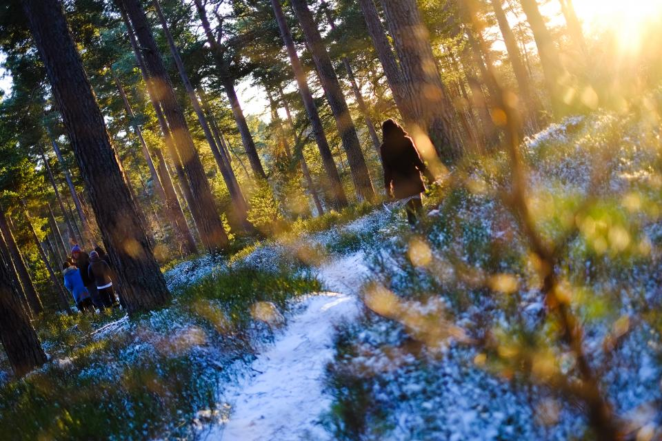 trees, forest, nature, snow, cold, winter, sunshine, people