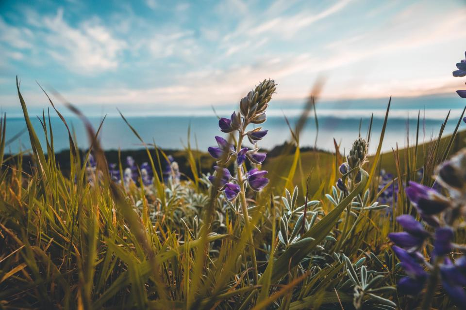 grass, flowers, field, outdoors, nature, sunshine, summer, sky