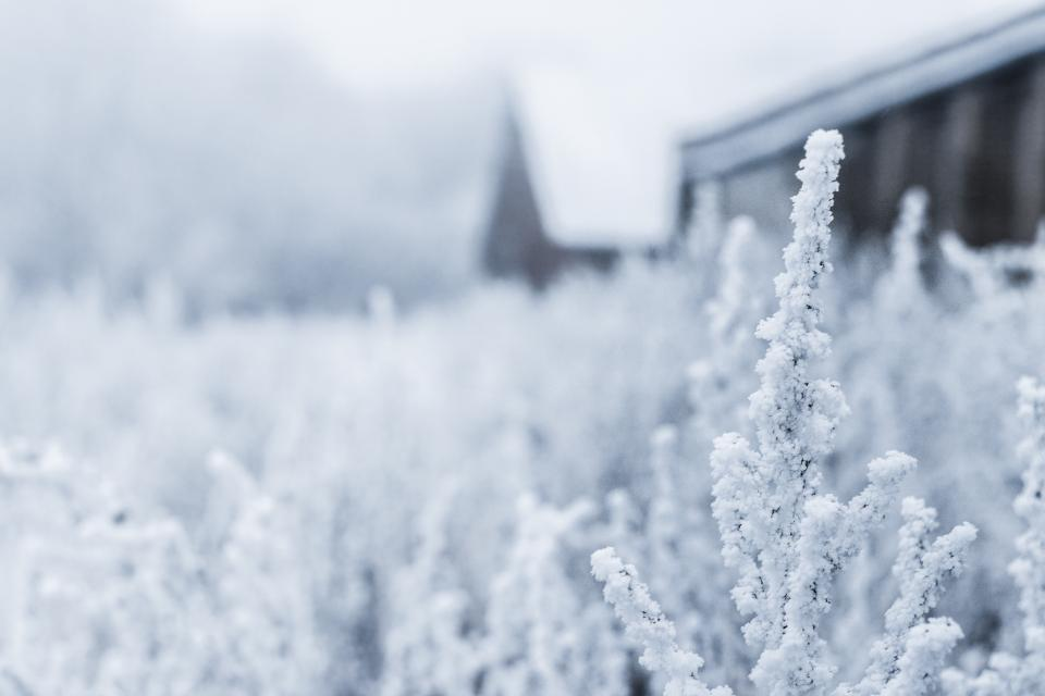 plants, nature, outdoors, snow, cold, winter, field