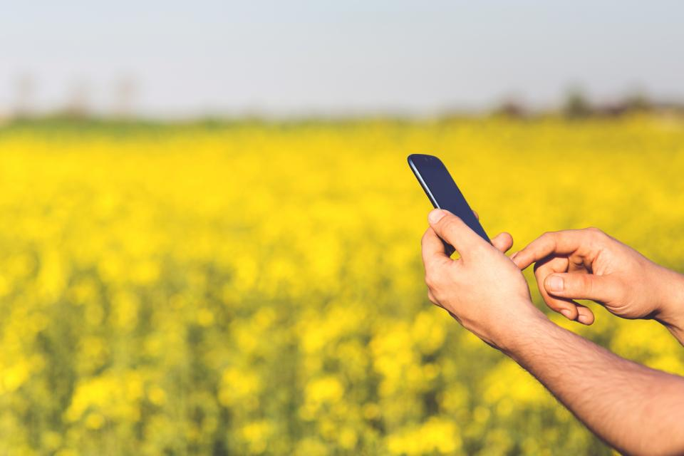 mobile, smartphone, hands, man, yellow, flowers, field, technology, touchscreen