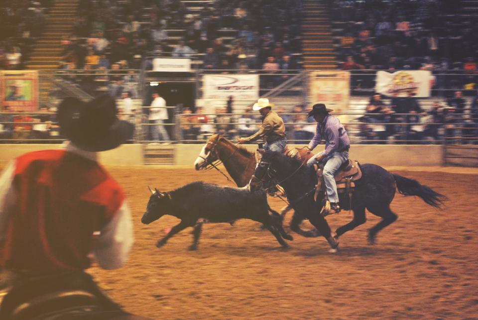 rodeo, horses, cowboys, people, spectators, entertainment, animals