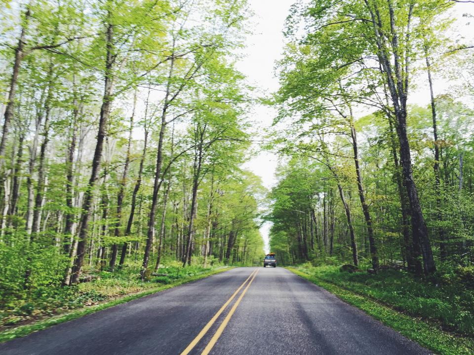 rural, road, highway, trees, forest, woods, nature, green, truck