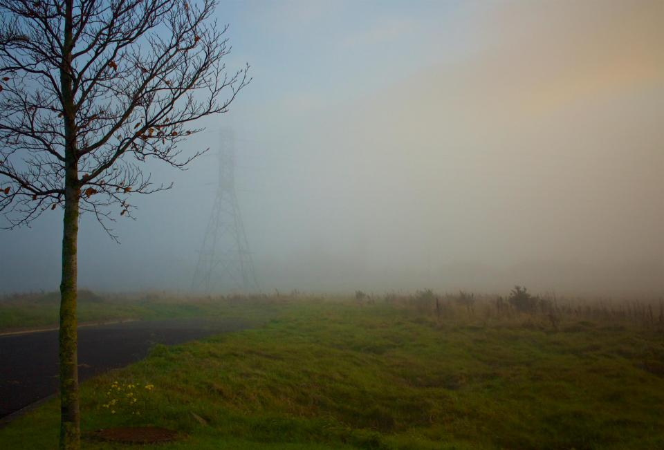 grass, field, trees, power lines, electricity, foggy, nature, outdoors