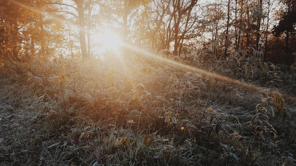 sunshine, sunlight, sun rays, plants, trees, bushes, forest, woods, nature, outdoors