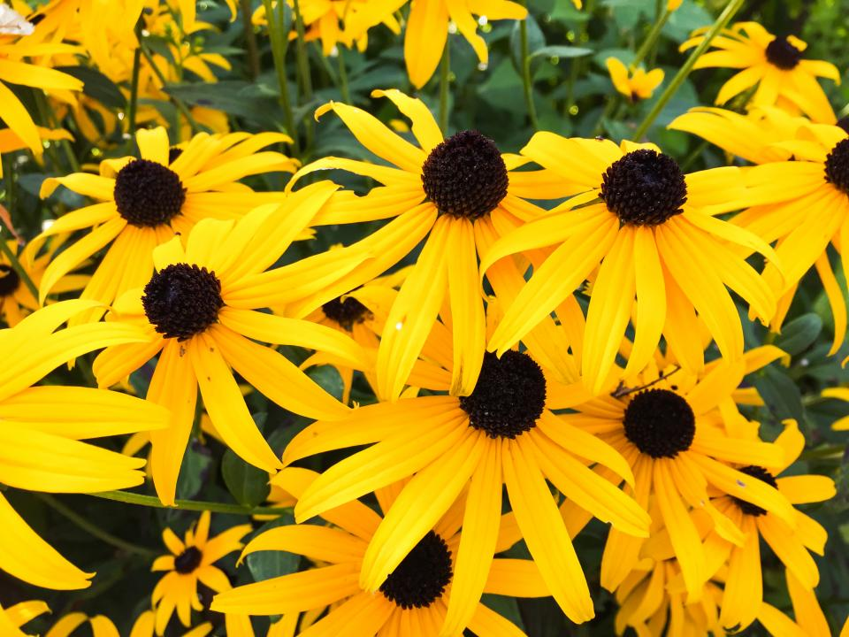 yellow, flowers, garden, nature, sunshine, summer