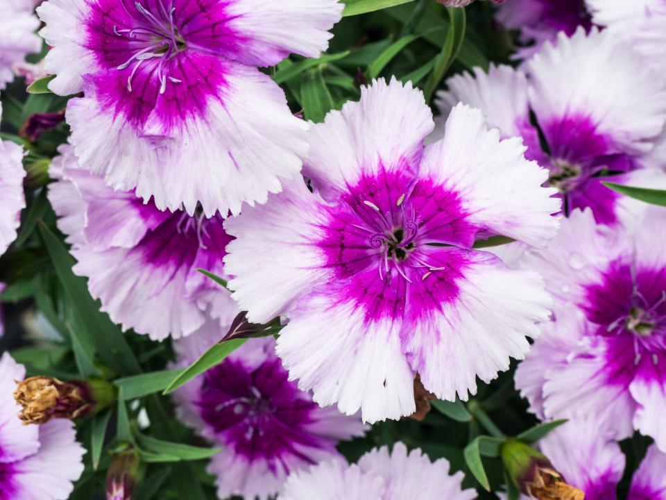 purple, flowers, garden, nature