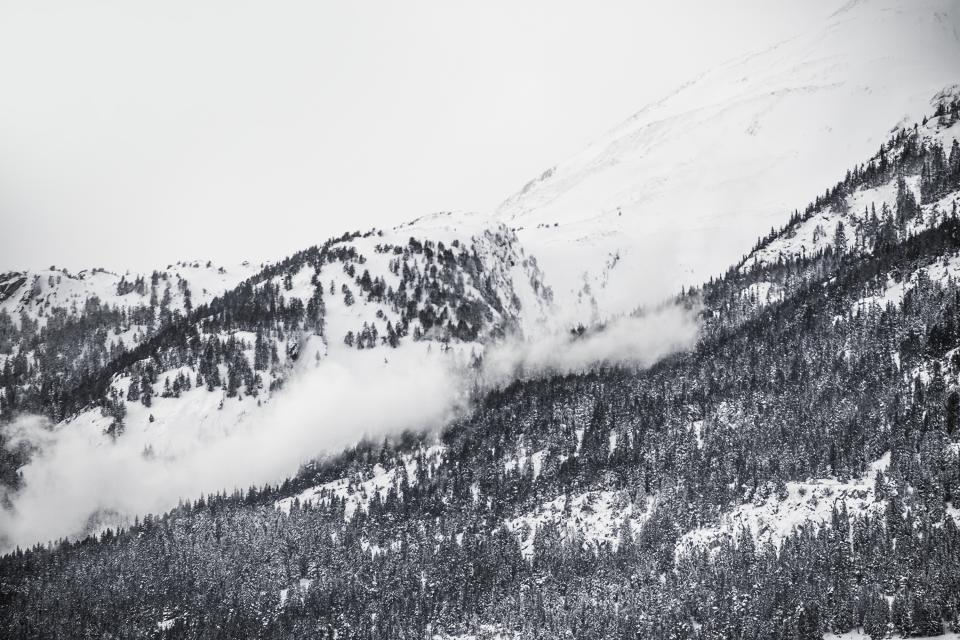 winter, snow, trees, forest, hills, mountains, black and white, landscape, nature