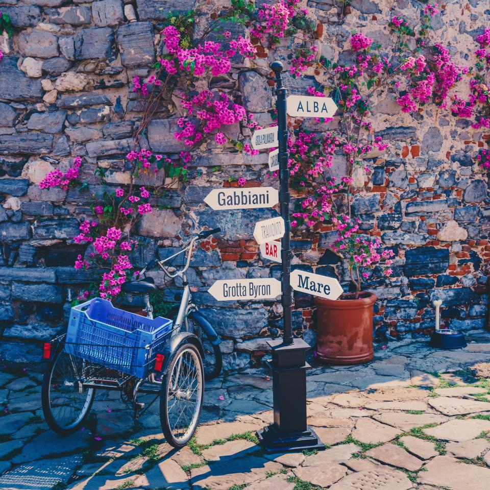 flower, blossom, plant, nature, pink, rock, pot, wall, bricks, bike, bicycle, basket, pole