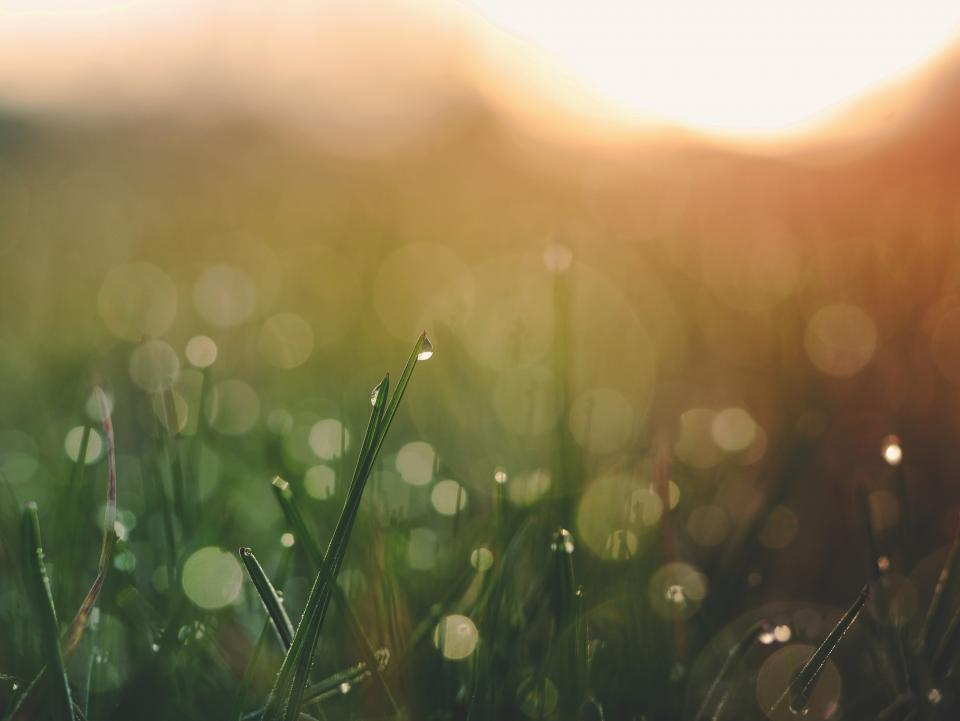 sunset, grass, nature, outdoors, field, blurry, bokeh, summer