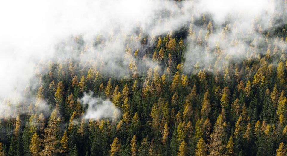 nature, landscape, forest, trees, clouds, fog, green