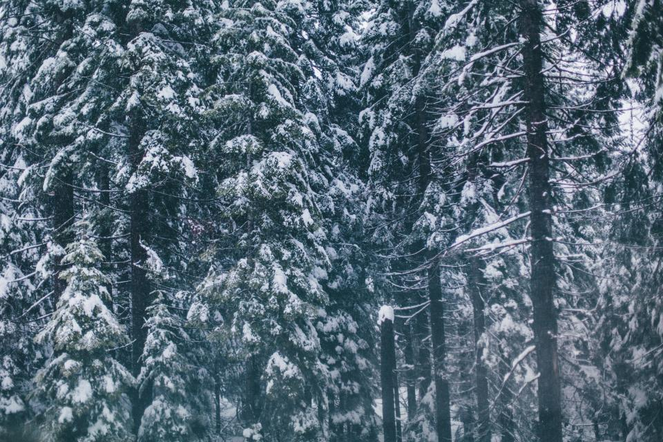 snow, cold, winter, trees, forest, woods, nature
