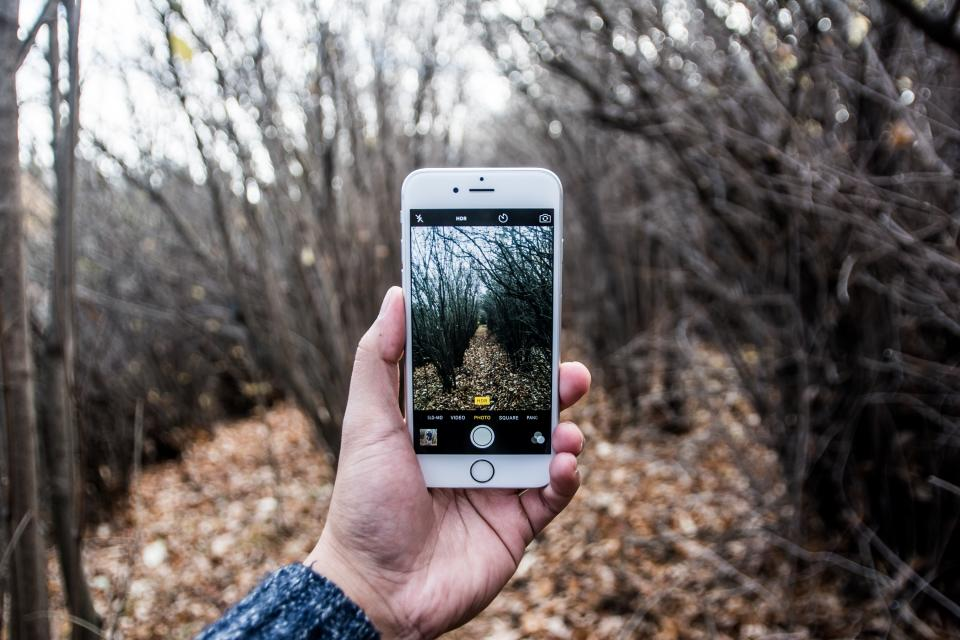 iphone, camera, picture, photography, photographer, hands, mobile, smartphone, cell phone, nature, trees, leaves