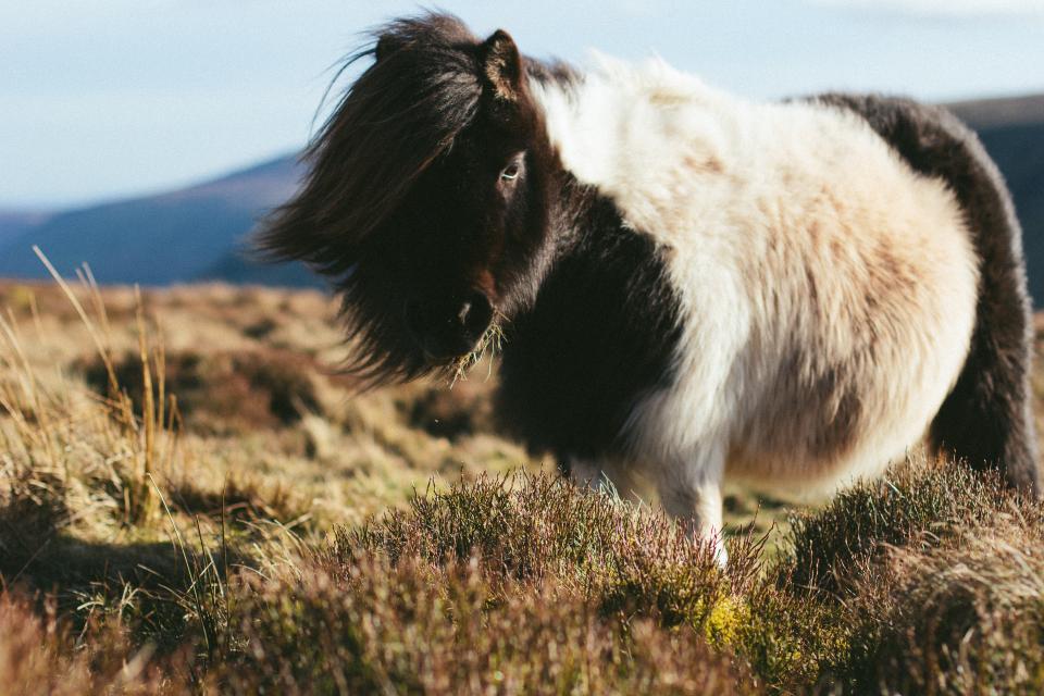 animals, horse, hair, graze, grass, adorable, fluffy