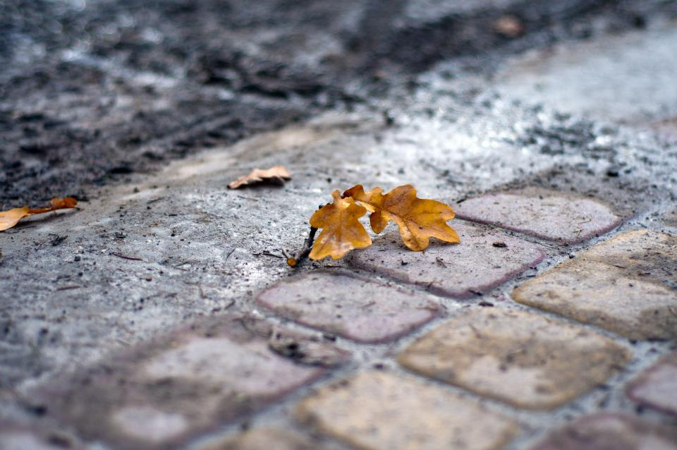 Leaf on the street
