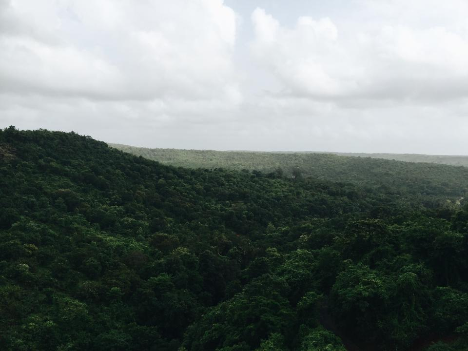 green, forest, jungle, trees, leaves, nature, plants, flowers, sky, clouds