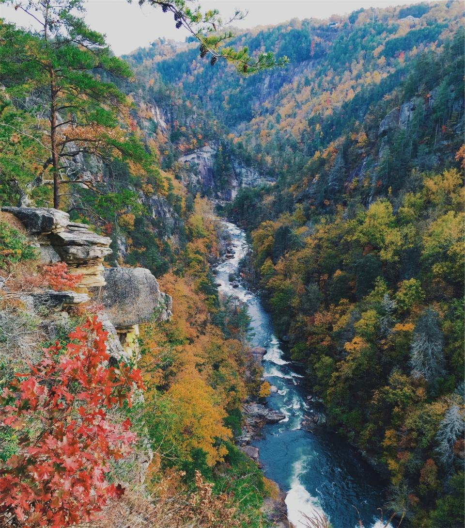 river, water, stream, nature, mountains, trees, autumn, leaves
