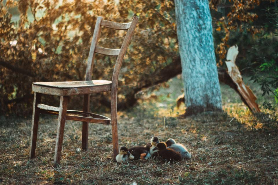 chair, grass, outdoors, yard, trees, nature, rural, countryside, animals
