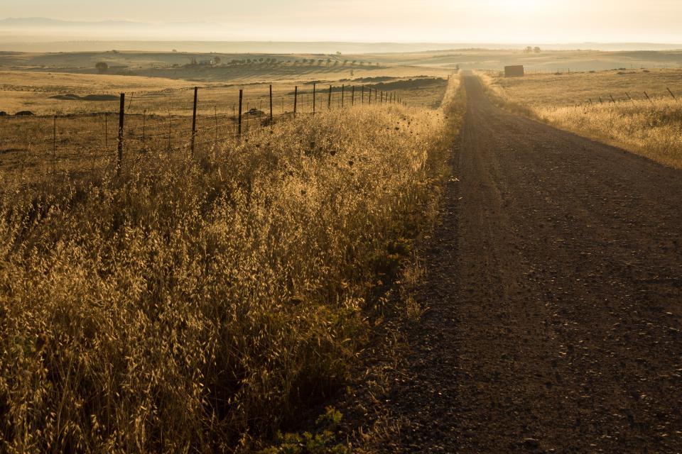 rural, dirt, road, grass, field, grass, countryside, landscape, nature, sunrise