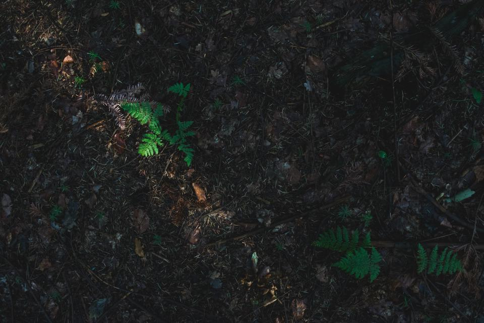 ground, dirt, soil, forest, woods, nature, outdoors