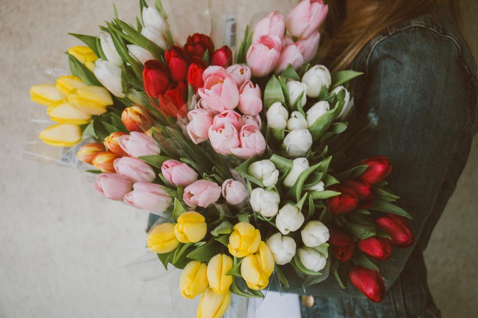tulips, flowers, bouquet, girl, woman, people