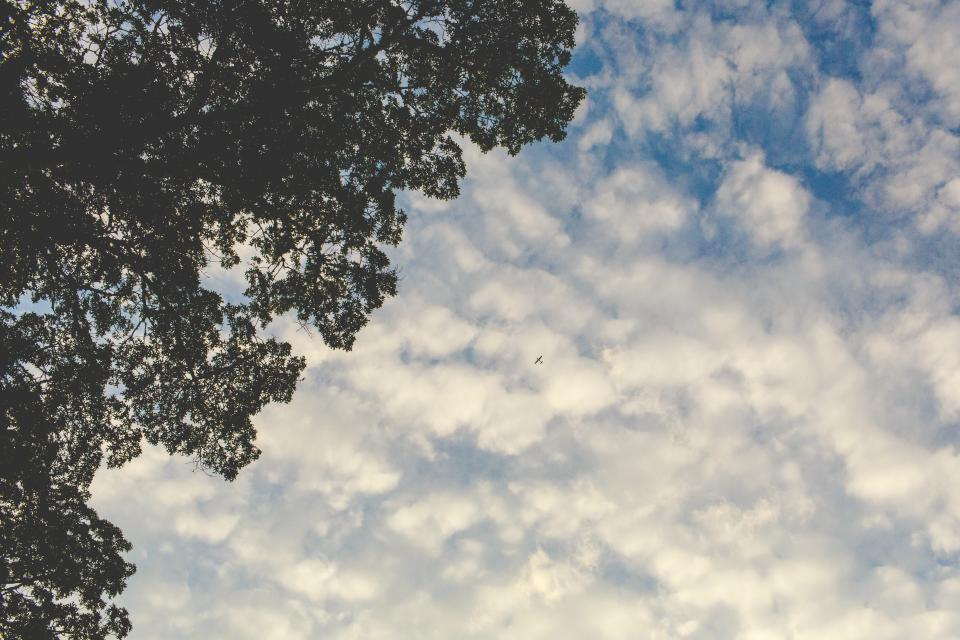 sky, clouds, airplane, flying, travel, trip, leaves, trees, branches, nature, outdoors