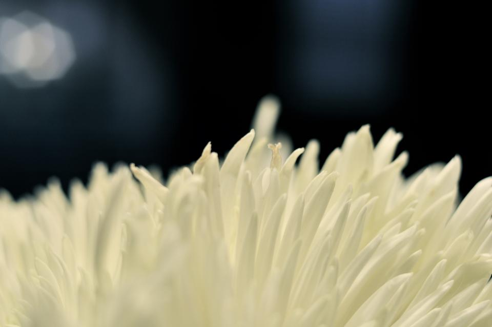 white, flower, nature