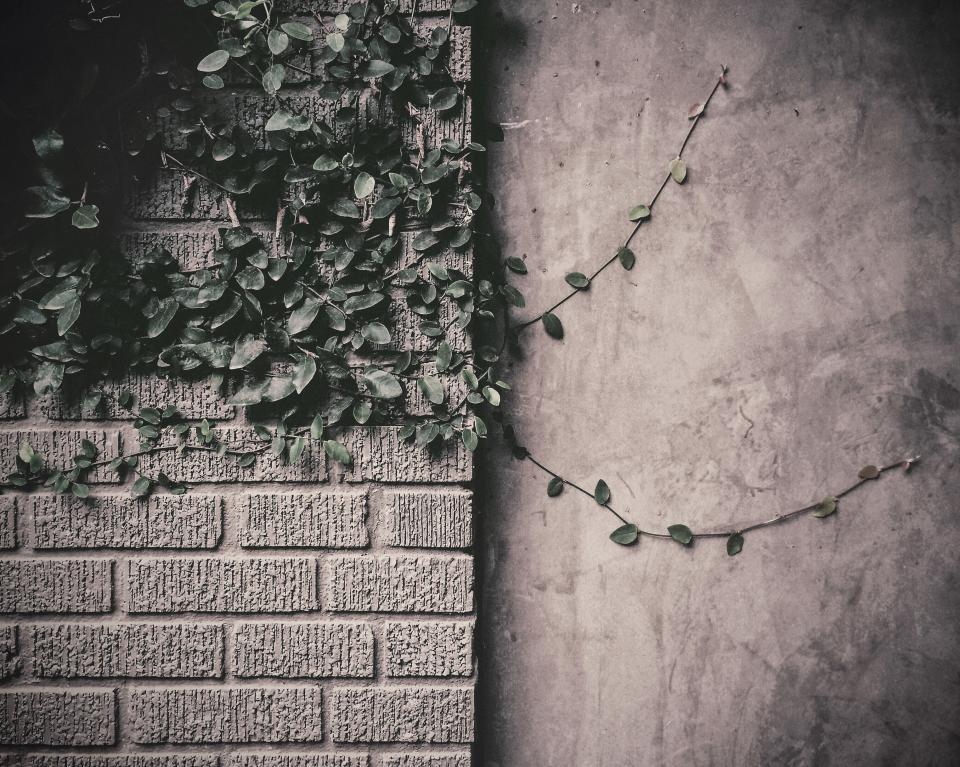 vines, leaves, bricks, wall