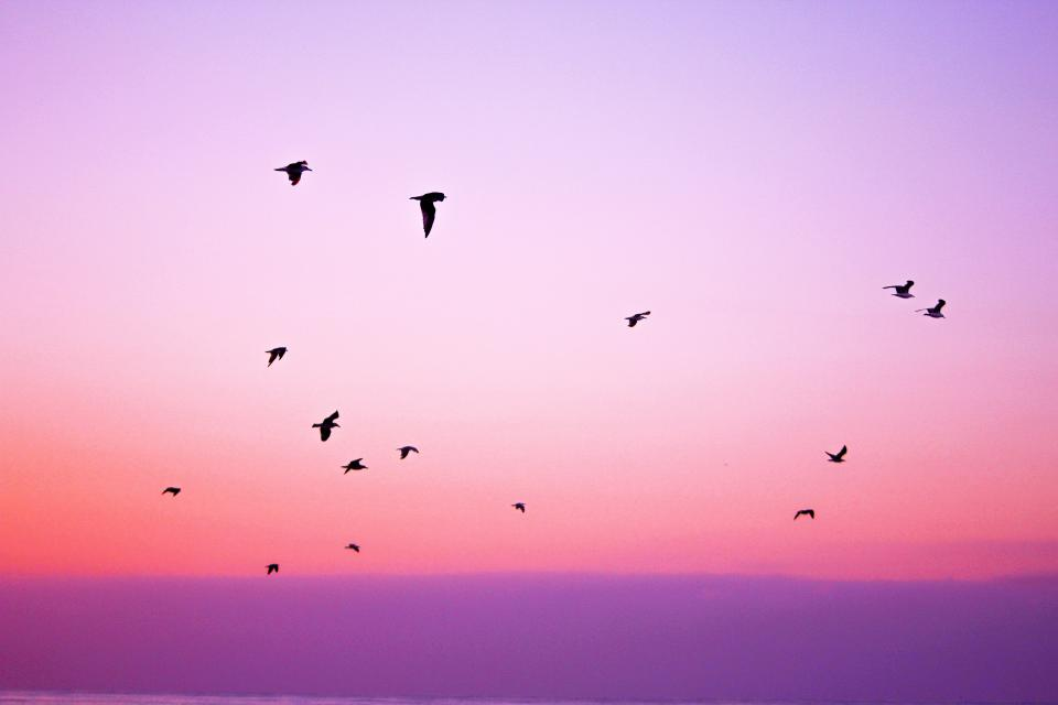 pink, purple, sky, birds, flying, animals, sunset, dusk