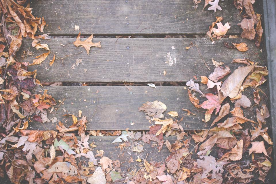 wood, deck, leaves, autumn, fall, nature, outdoors