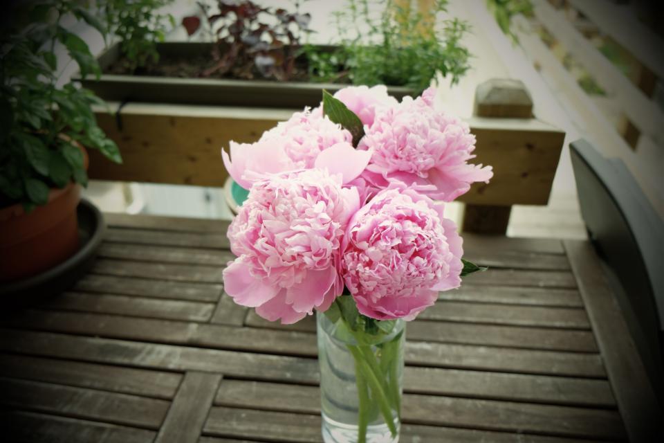 pink, flowers, vase