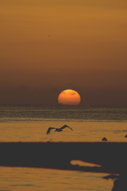 nature, water, ocean, sea, surface, still, calm, sky, clouds, horizon, dusk, dawn, bird, flight, sun, shadows, light, silhouette