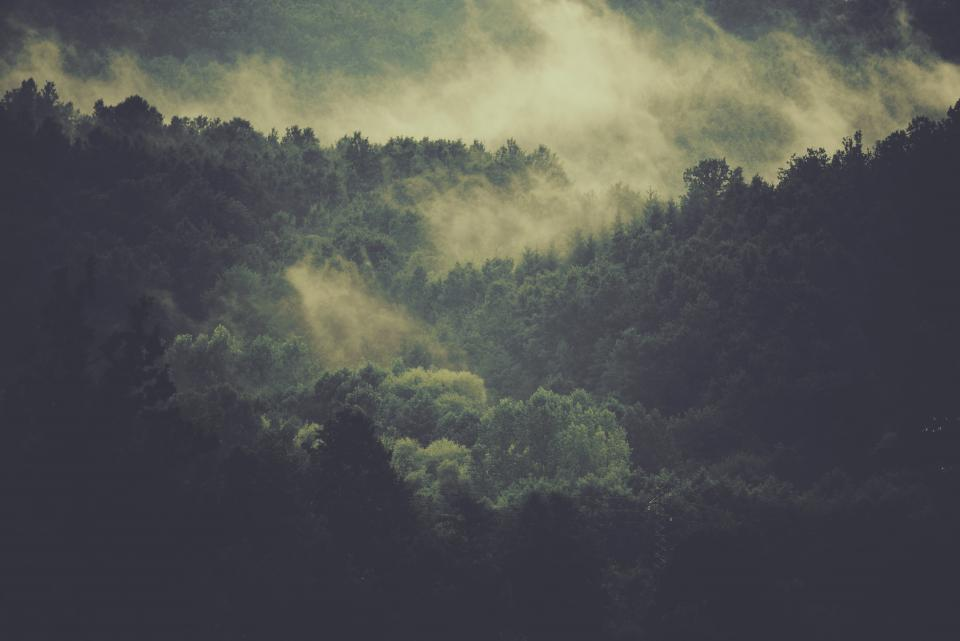 trees, forest, woods, fog, nature, landscape, green