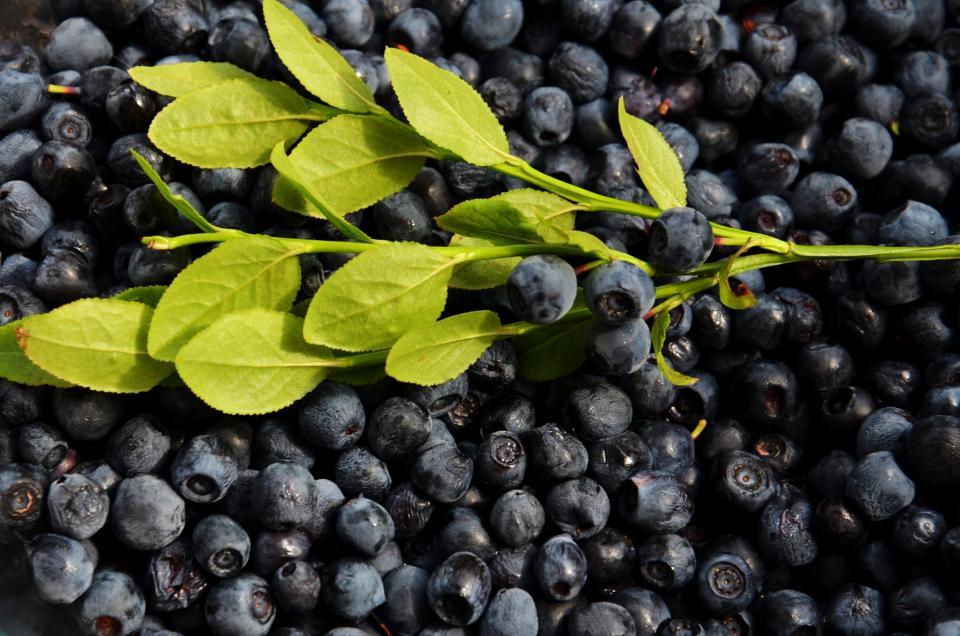 blueberries, fruits, food, healthy
