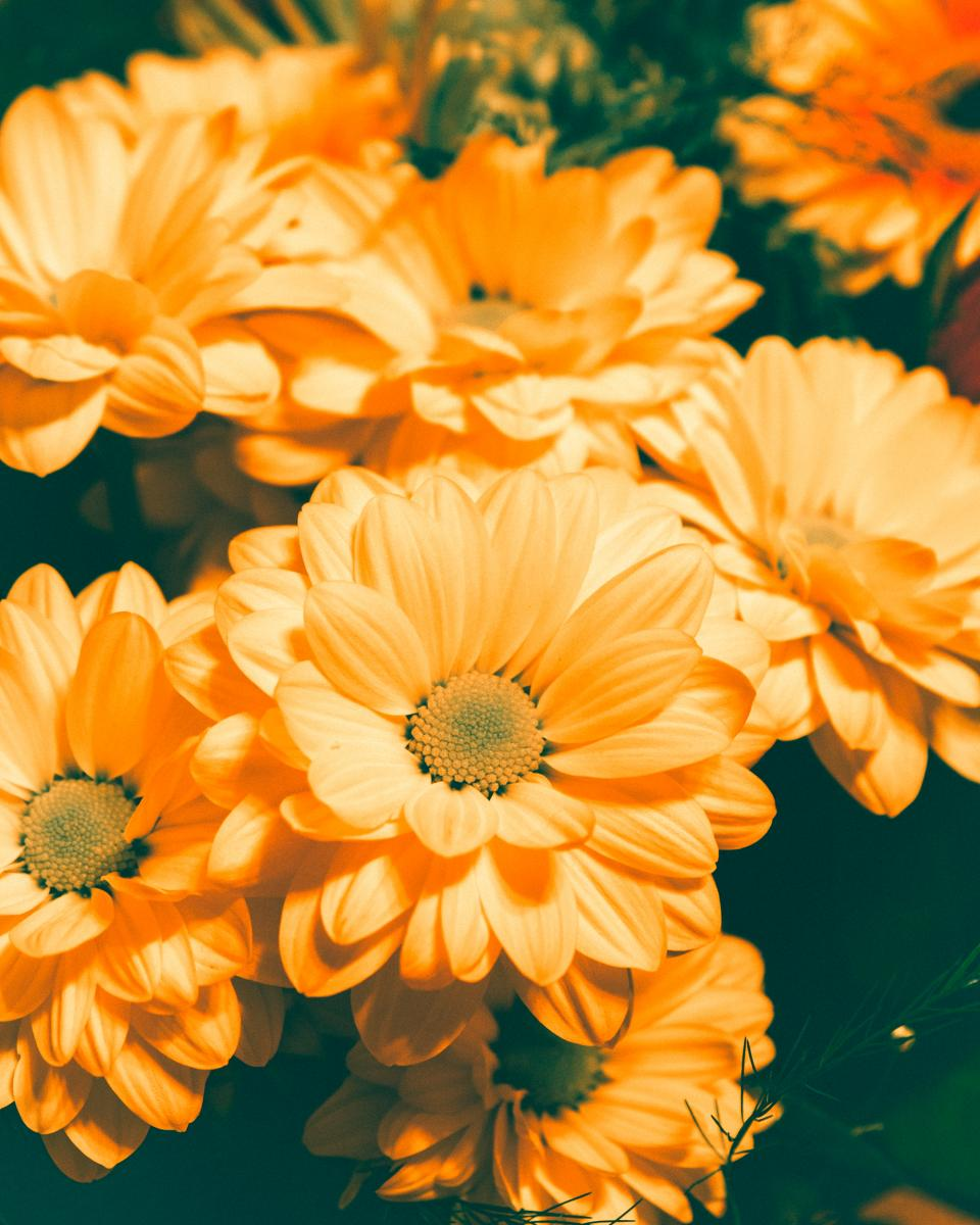 orange, flowers, garden, nature